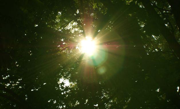 Die Sonne ist für die Vitamin-D-Aufnahme essentiell