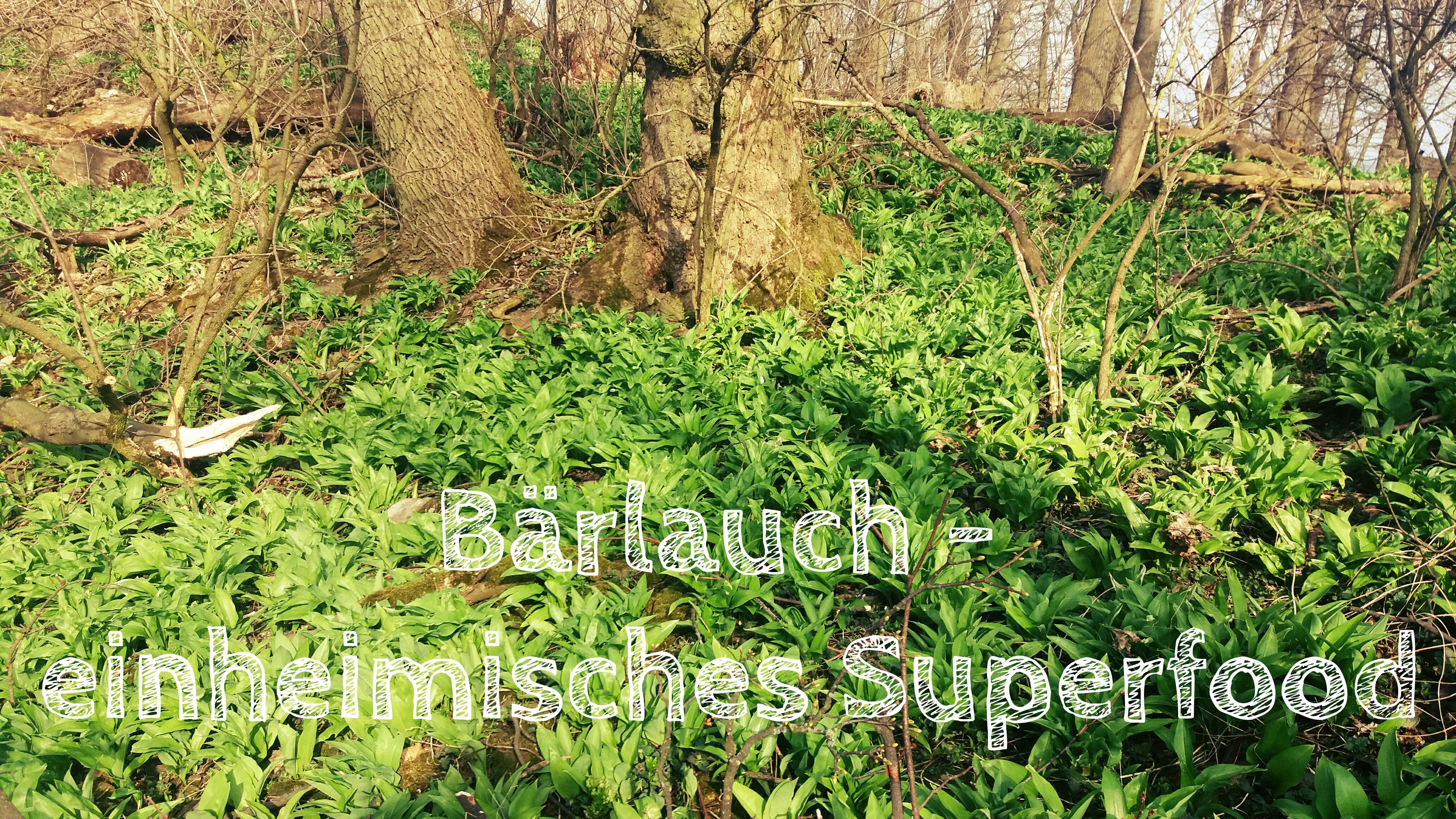 Bärlauch - einheimisches Superfood