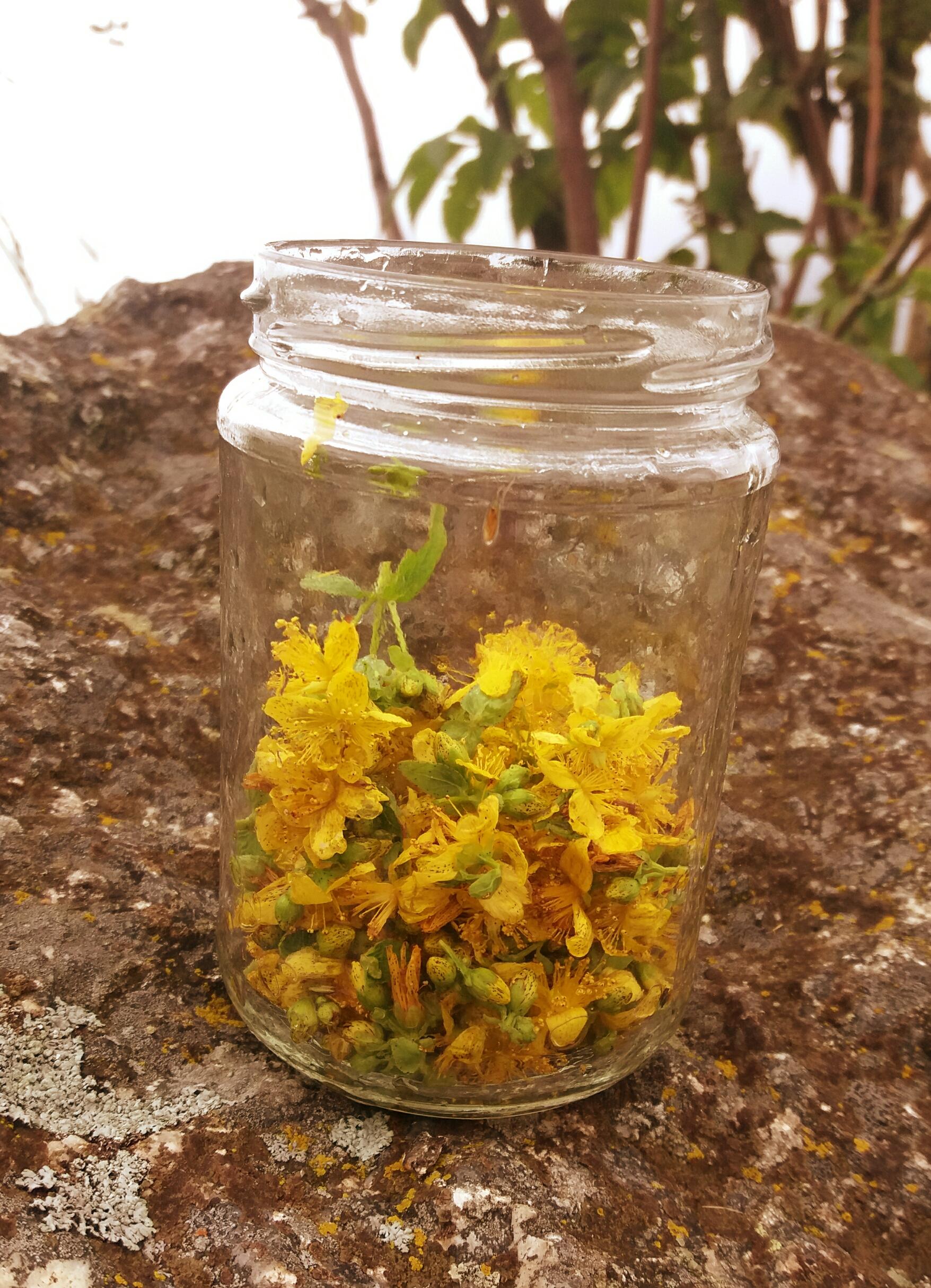 Gesammelte Blüten im Glas