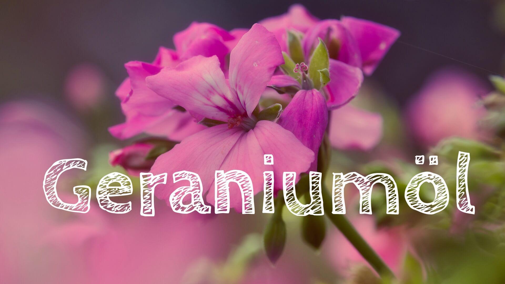 Ätherische Öle – Geraniumöl