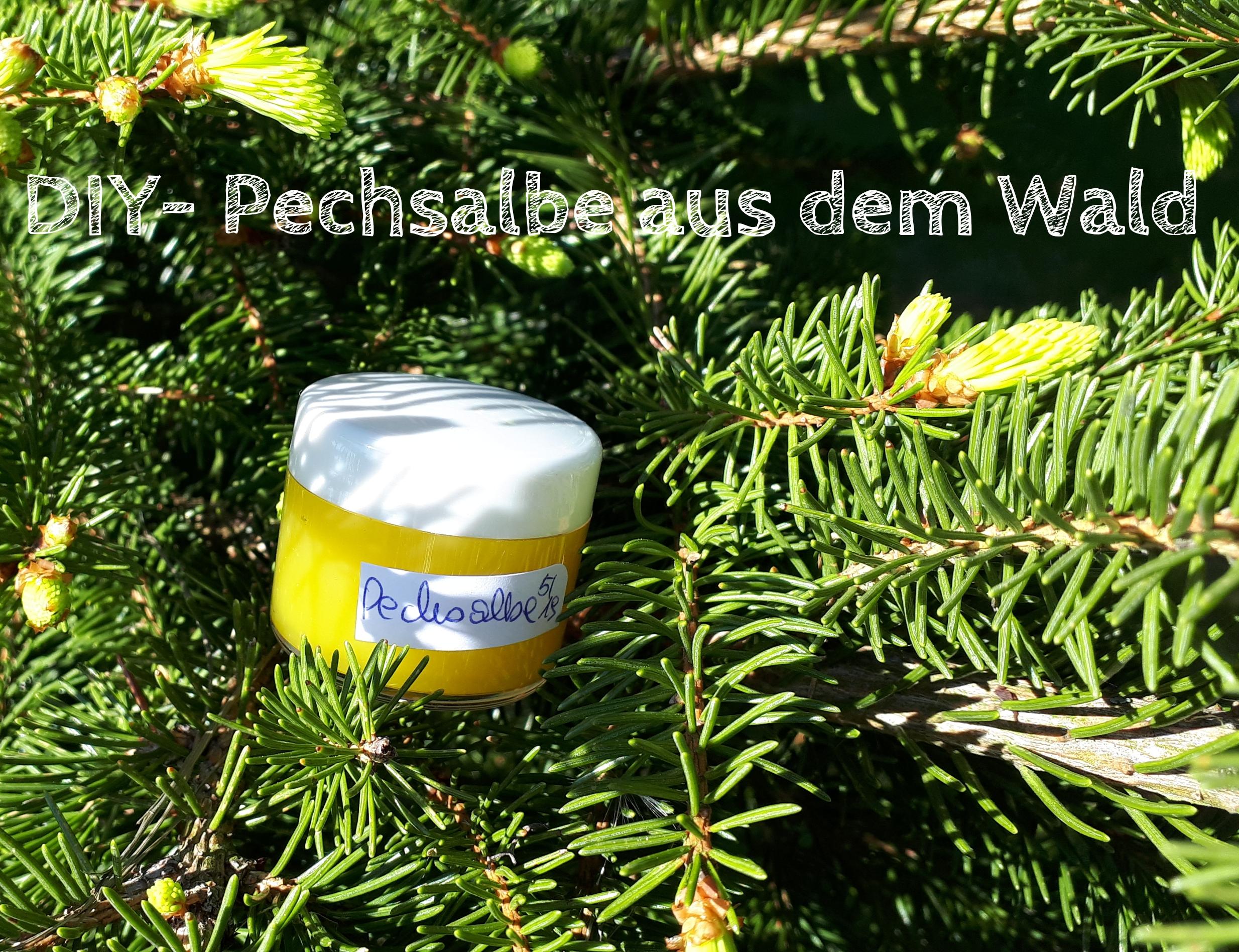 DIY – Pechsalbe aus dem Wald