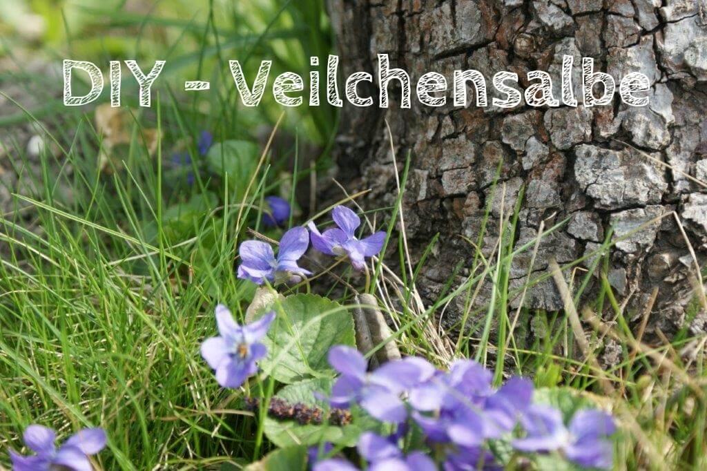 DIY – Veilchensalbe